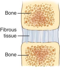 Fibrous Joint